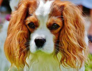 10 המאכלים הכי מזיקים לכלבים