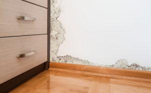 האם הסכנה נעלמת לחלוטין לאחר טיפול של עובש בקירות
