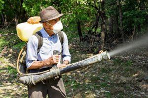 7 סיבות להיפטר מתולעי העץ בבית ומהר